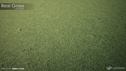 REAL GRASS is a realistic 3D model library for architectural visualization in Rhino 5 and v-ray with 122 different grass models.