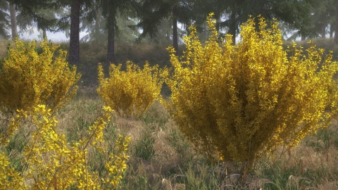 REAL SHRUBS is a realistic 3D shrub library for architectural visualization in Rhino 5 with v-ray. The library includes 100 3D models in 10 species.