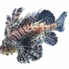 Lion Fish is a plugin based on the Geometry Central Library