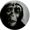 Chimpanzee is for fractal enthusiasts.