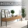 INTERIOR PLANTS is a collection of 40 realistic 3D models of plants in pots for Rhino 5 or higher and v-ray.