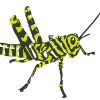 Zebra is a live multi agent behavior system(also known as Flocking or Swarming).  Used to achieve design goals using agents.